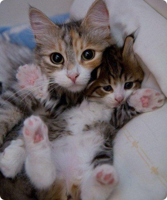 serré chatte amateur pics ce qui fait une fille gicler