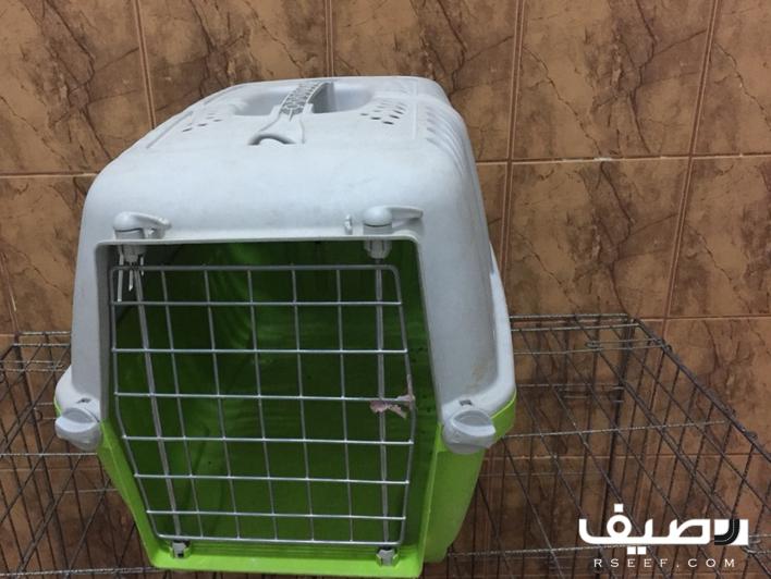 قطة ذكر شيرازي للبيع Compost Bin Compost