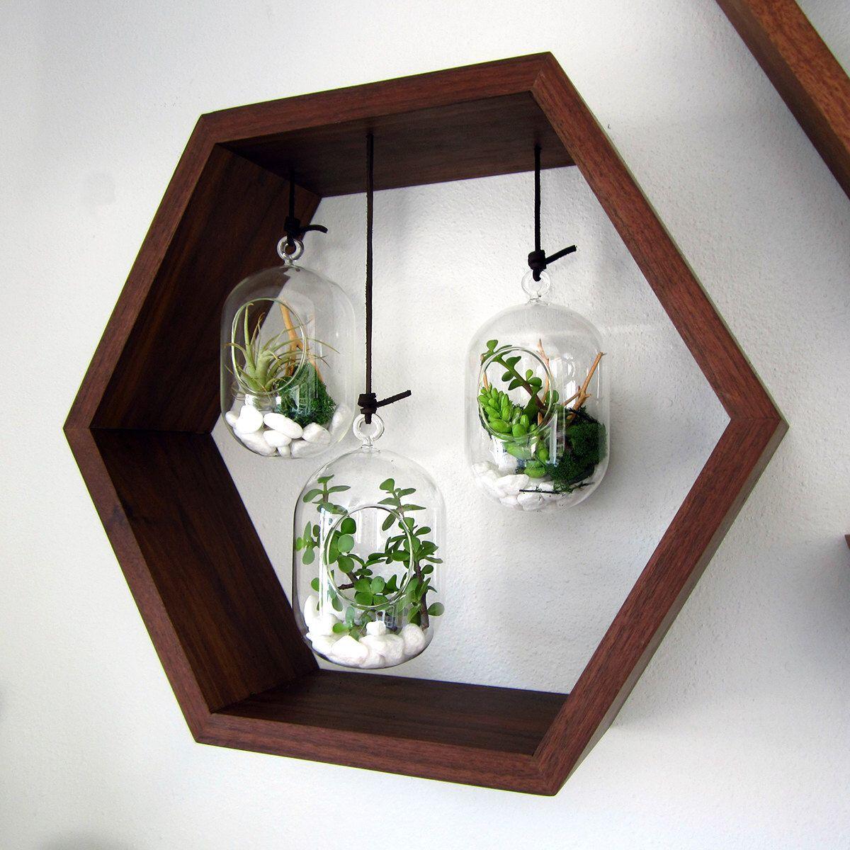 Hexagon hanging terrarium garden black walnut wall mounted by
