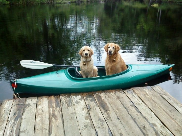 Kayak Golden Retrievers What We Do They Do They Go Everywhere