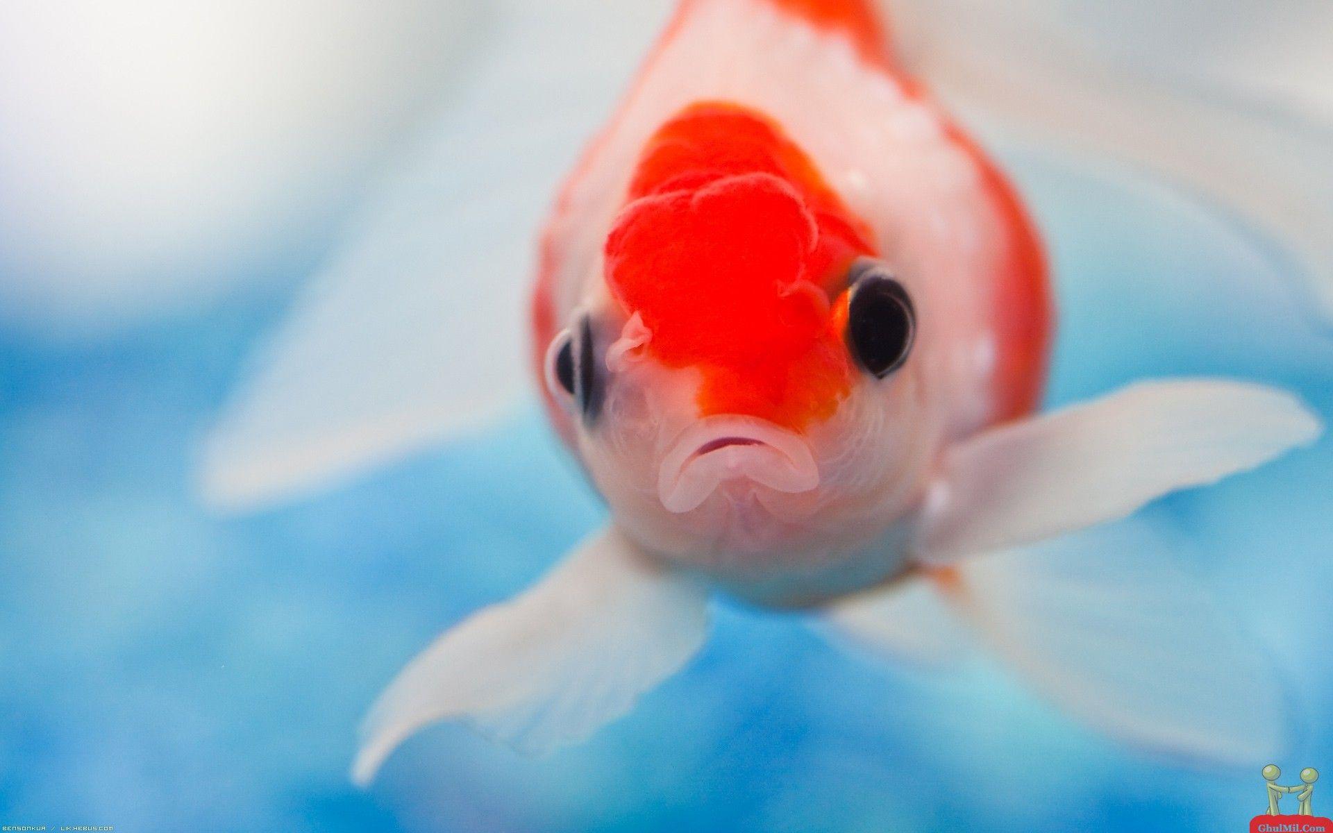 Colorful Fish | cute colorful fish desktop wallpaper download cute ...