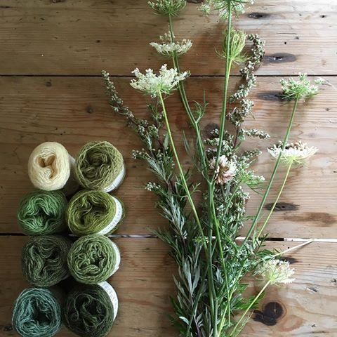 #naturaldyeing #garn #yarn #plantefarvning #plantefarvet #plantefarvetgarn  GRØN