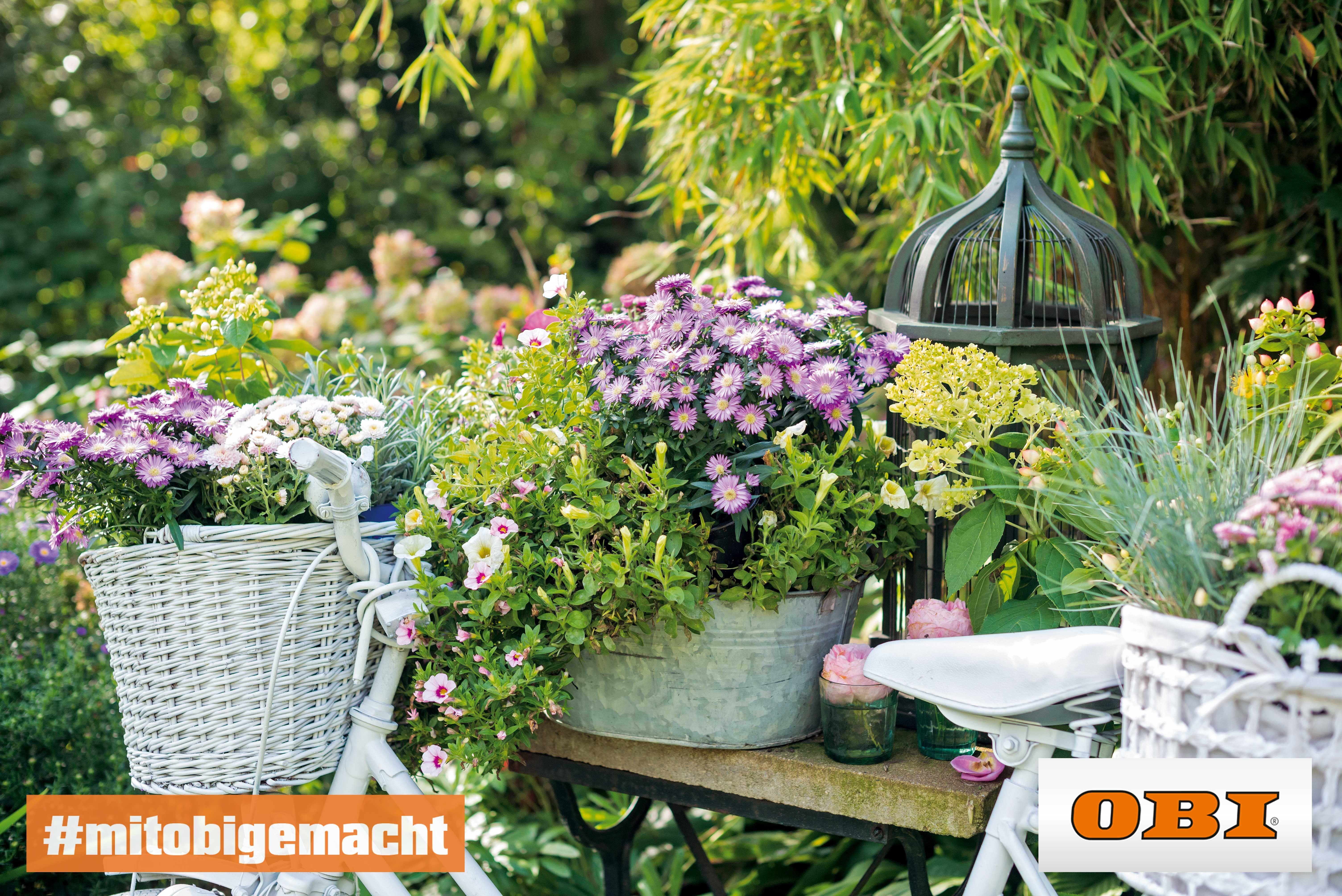 Mach Jetzt Deinen Garten Fruhlings Fit Mit Wunderschonen Blumen Von Obi Garten Blumen Obi Fruhling Mitobigem Pflanzen Pflanzen Kaufen Wunderschone Blumen