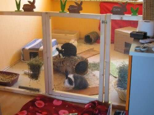 Indoor Rabbit Pen Idea Binkybunny Com House Rabbit