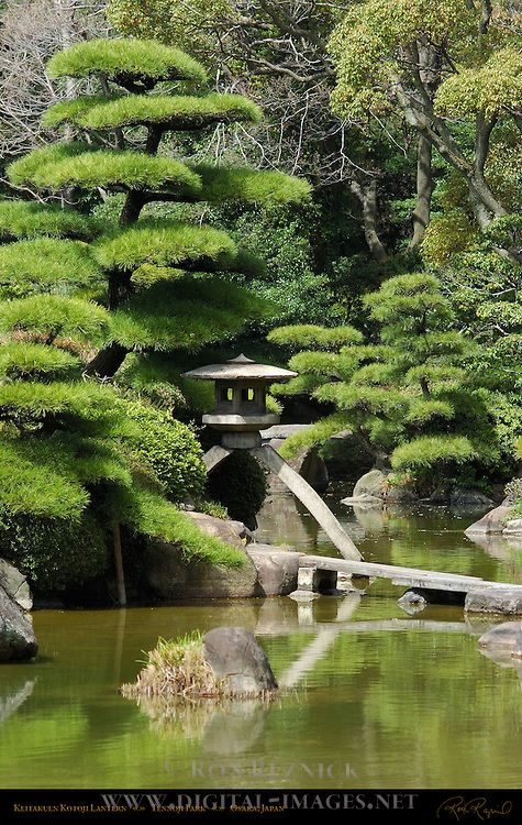 Japanese Garden Spruce Topiary