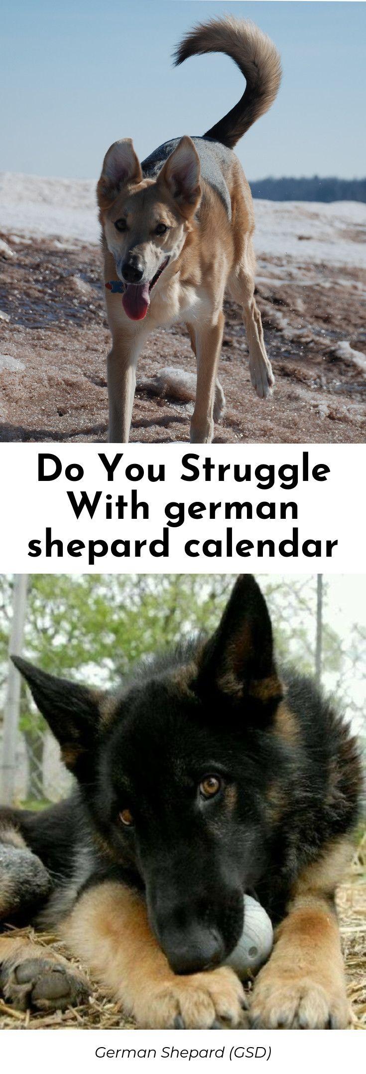 You need this buy german shepherd puppy near me best