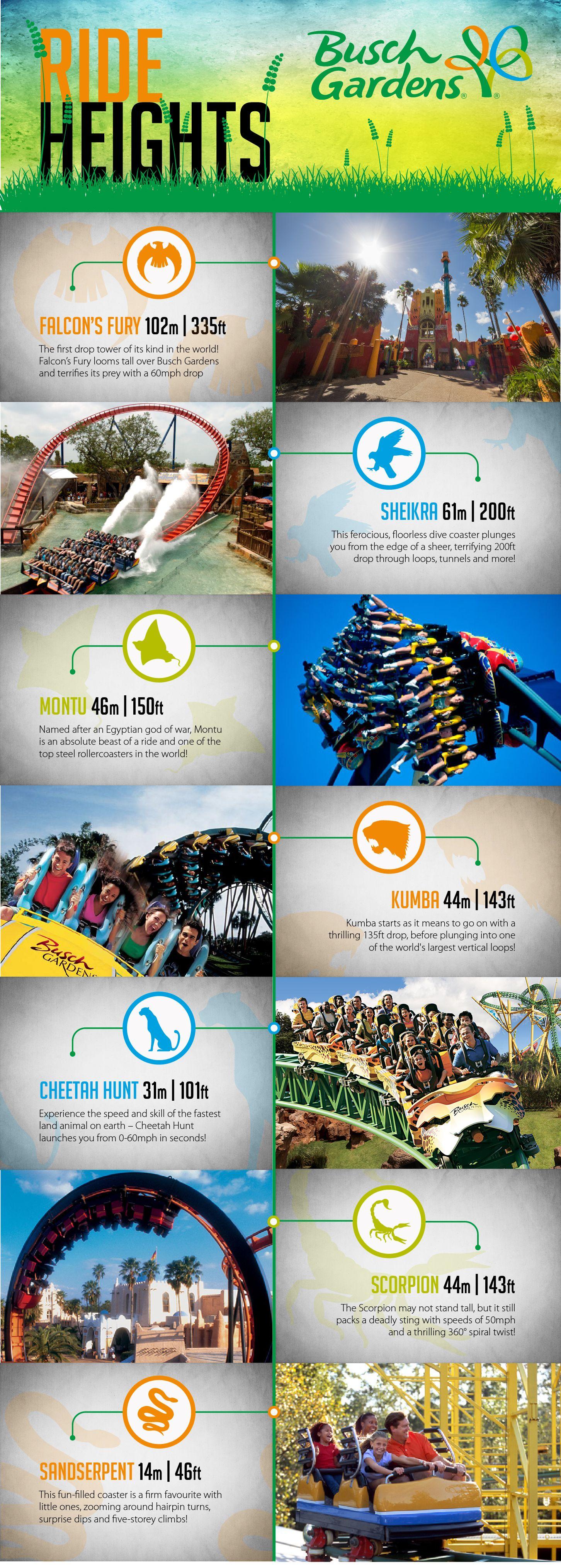e233adb32a9914120e204d305dc98526 - Ride Height Requirements Busch Gardens Tampa