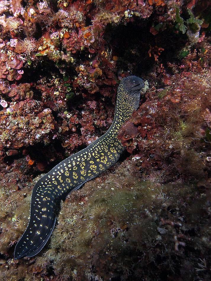 Slowdive - Golfo Aranci