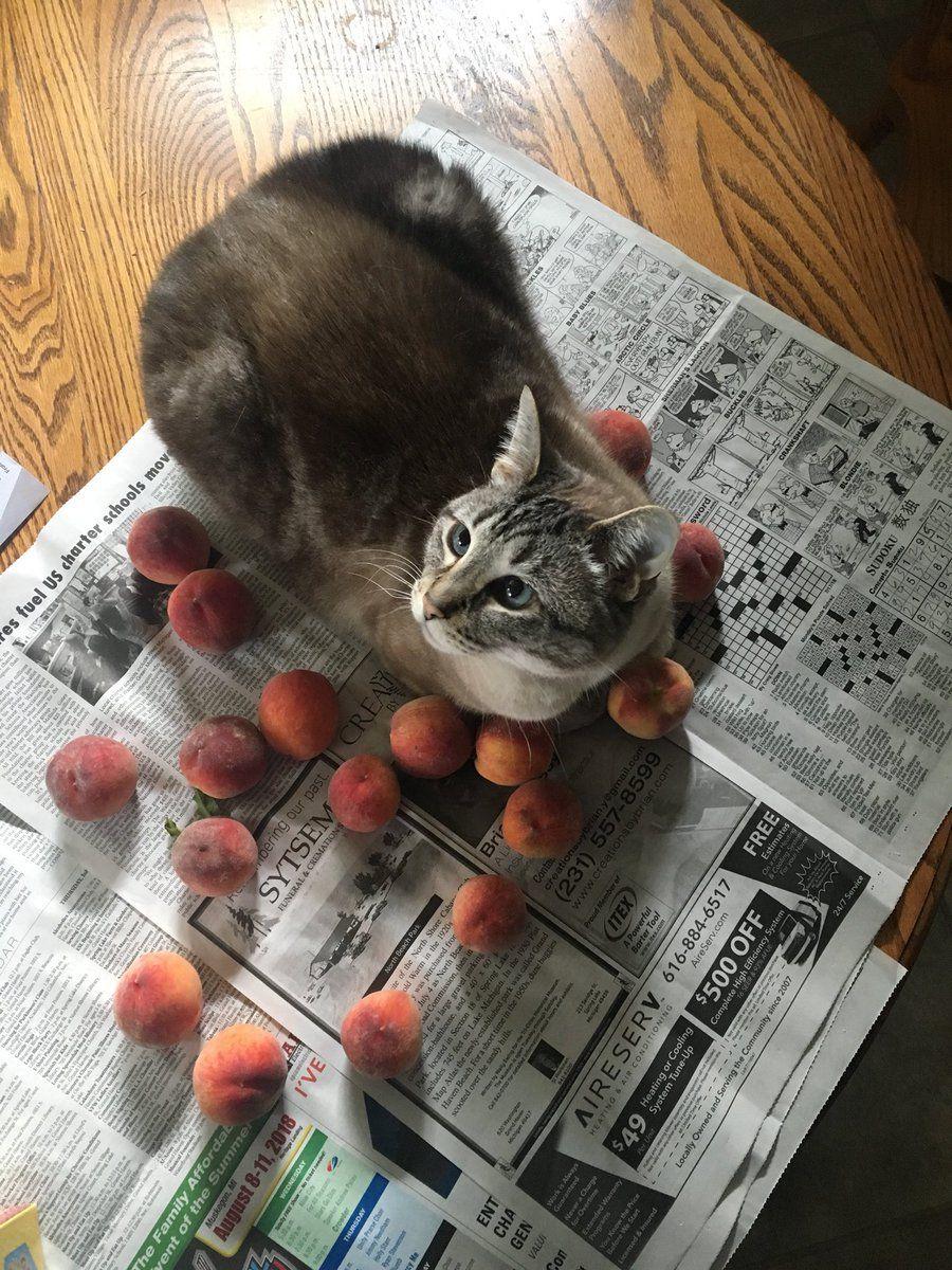 sloane (sipihkopiyesis) on Funny cat photos, Cute cats