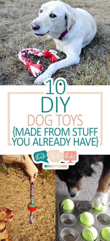 10 Diy Dog Toys Made From Stuff You Already Have With Images