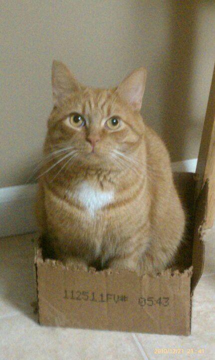 Bennington's Box...