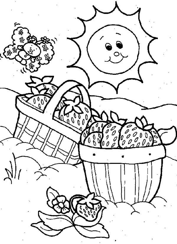 Beautiful Basket Picnic Coloring Page Netart Coloring Pages Color Coloring Pictures
