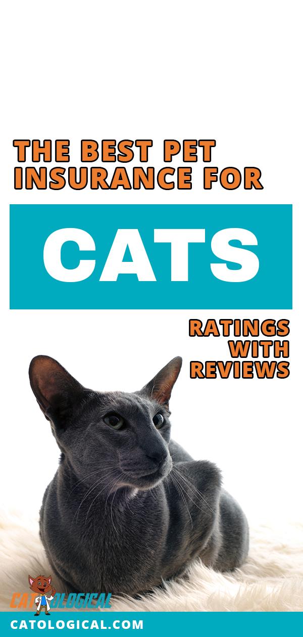 The Best Pet Insurance For Your Cat Pet insurance