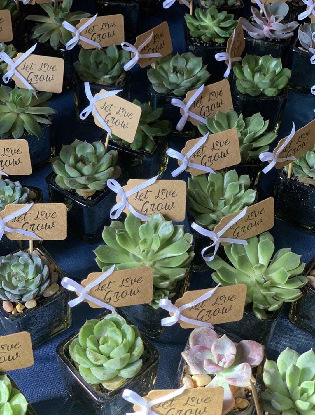 Standard Favor Tags 20 Pack Succulent Wedding Favors Hawaiian Wedding Favors Inexpensive Wedding Favors
