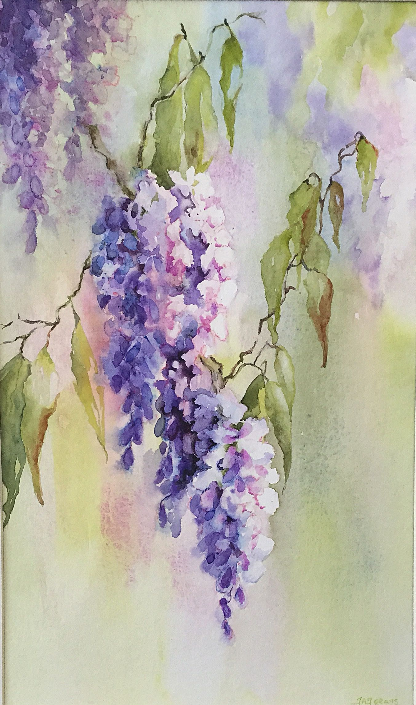 Transparent Watercolour Of Glycine Wisteria By Judith Jerams