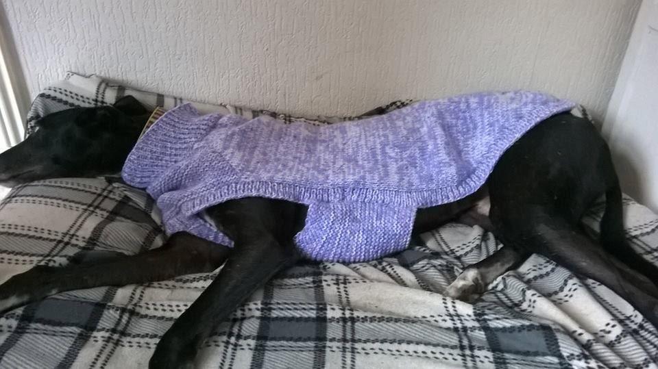 Greyhound Sweater Knitting Pattern FREE UK postage by greyhounds4me ...
