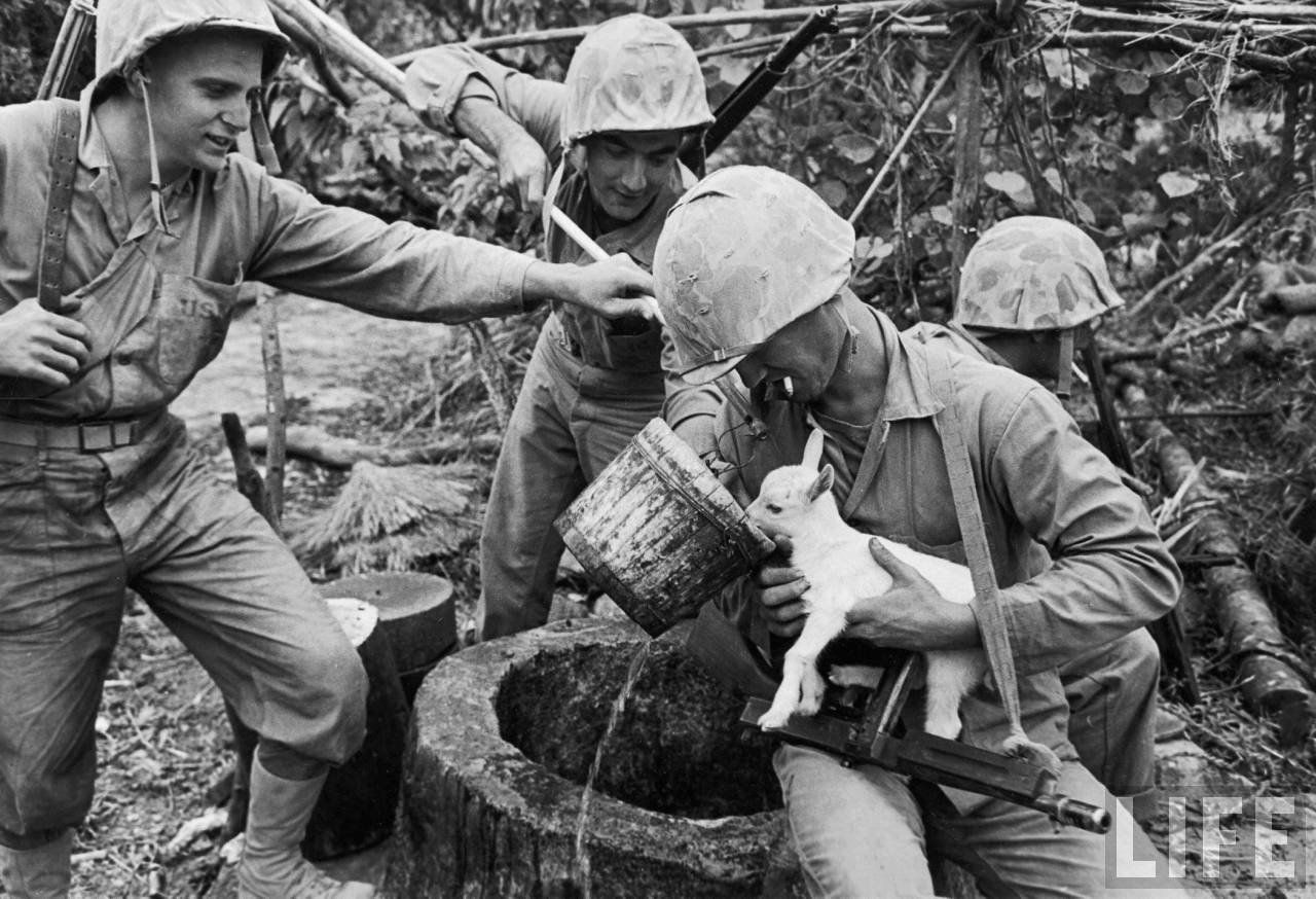 Group of Marines take a break during the Battle of Okinawa to give a baby goat, some water, by J.R. Eyerman April 1945