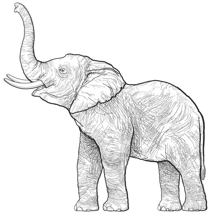 Simple little cute elephant tattoo design idea