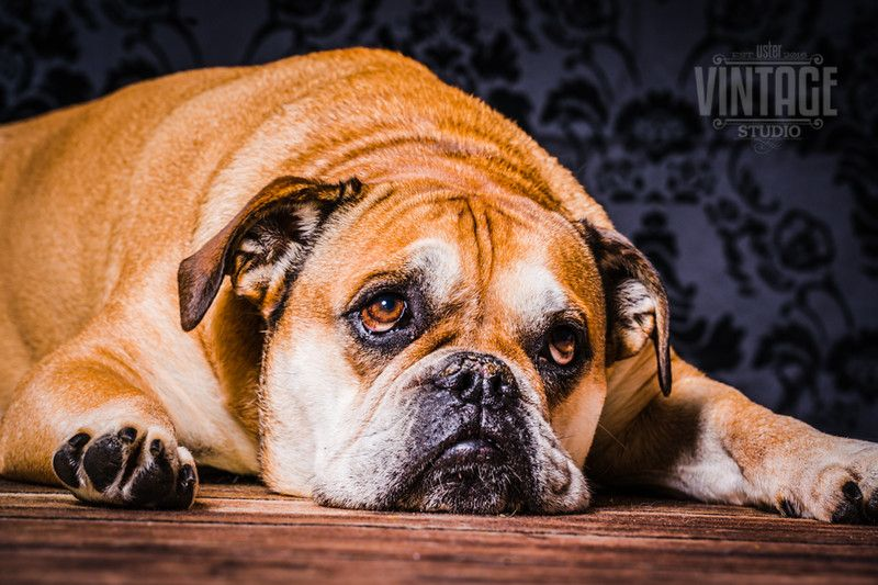 Hundefotos Im Fotostudio Uster Fotostudio Alex Gmbh Hundefotos Hunde Fotos Lustige Hundefotos