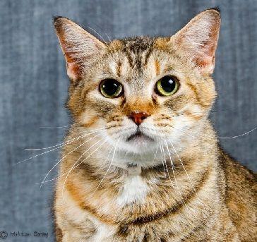 Houston SPCA Free Cat Adoptions July 1315 Katzenbabys
