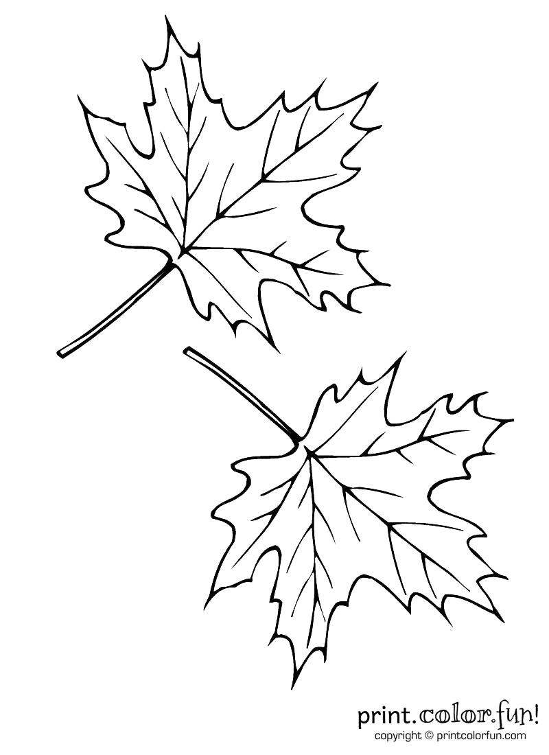 It is a graphic of Vibrant Grabbing Leaf Drawing