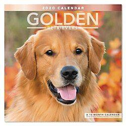 Mead Golden Retrievers Monthly Wall Calendar 12 X 12 January