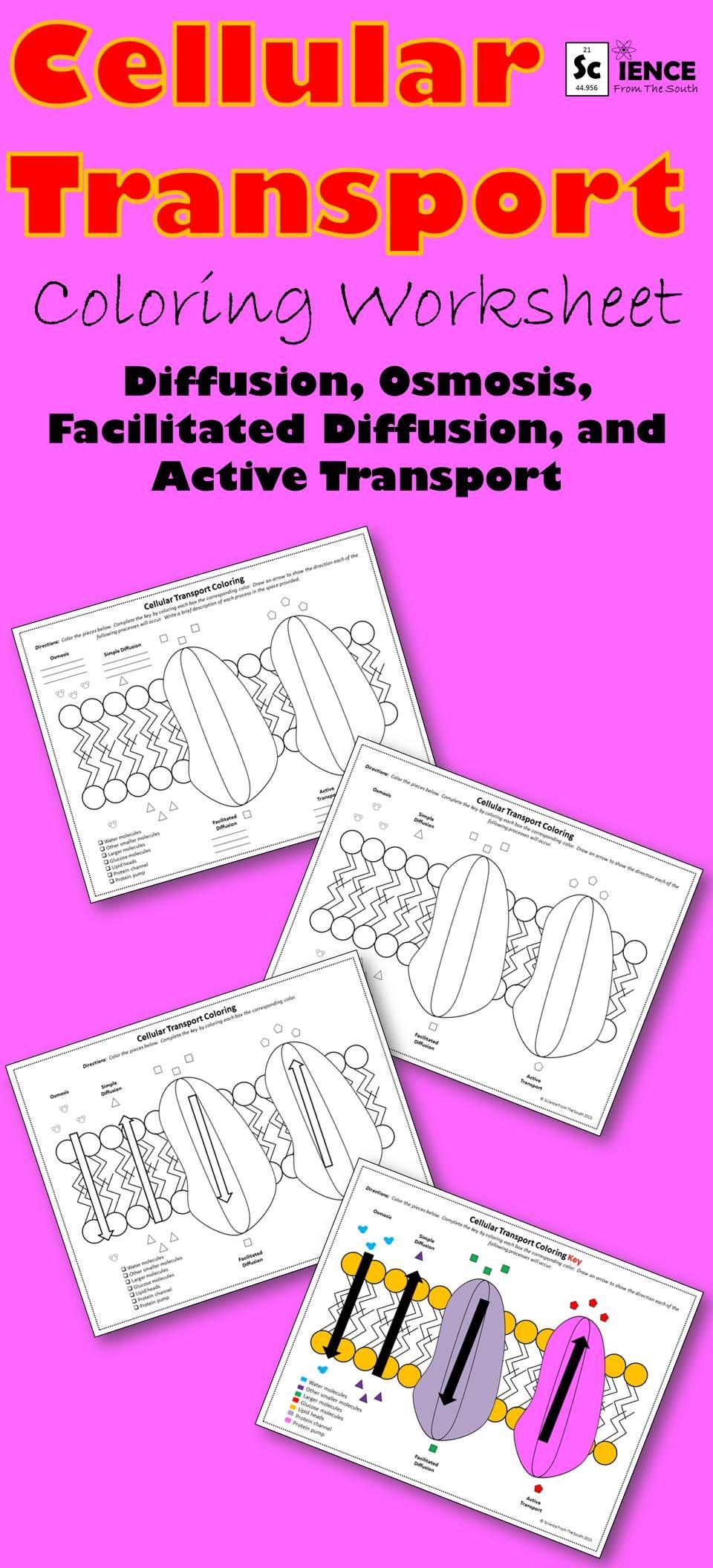Cell Transport Doodle Docs Coloring Notes Or Assessment Color Worksheets Cell Transport Animal Cells Worksheet [ 2112 x 960 Pixel ]