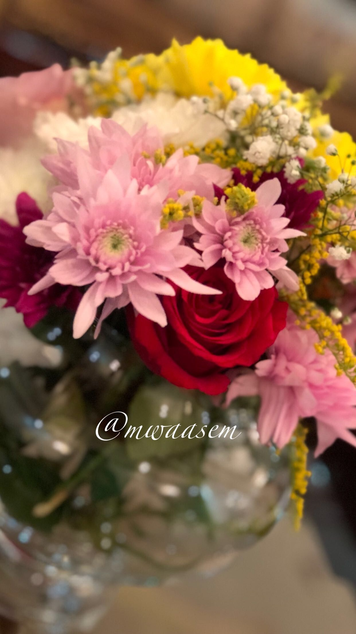 تنسيق فازات الورد من مواسم Mwaasem عرضها بسناب شات Rose Plants Flowers