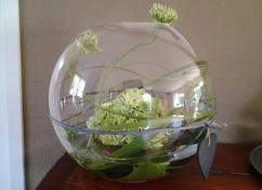 Bloemstuk in glazen bol vissenkom e n grote hortensia op aan aantal grote groene bladen en for Decoratie stuk om te leven