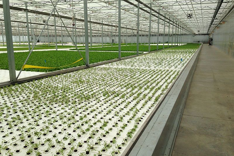 Commercial hydroponic systems greenhouses by rough for Hydroponic raft system design