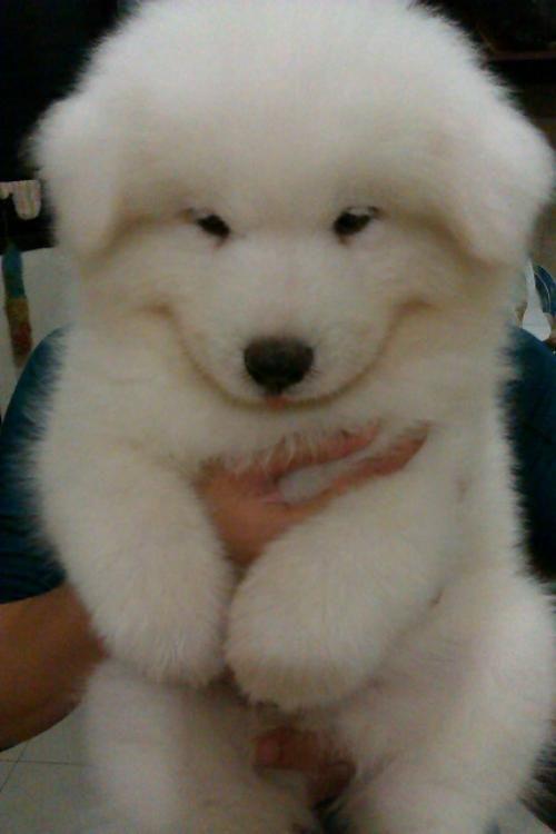 Wonderful Spherical Chubby Adorable Dog - e23aff73f3bbda8ce1382ea6f653ab1c  HD_921827  .jpg