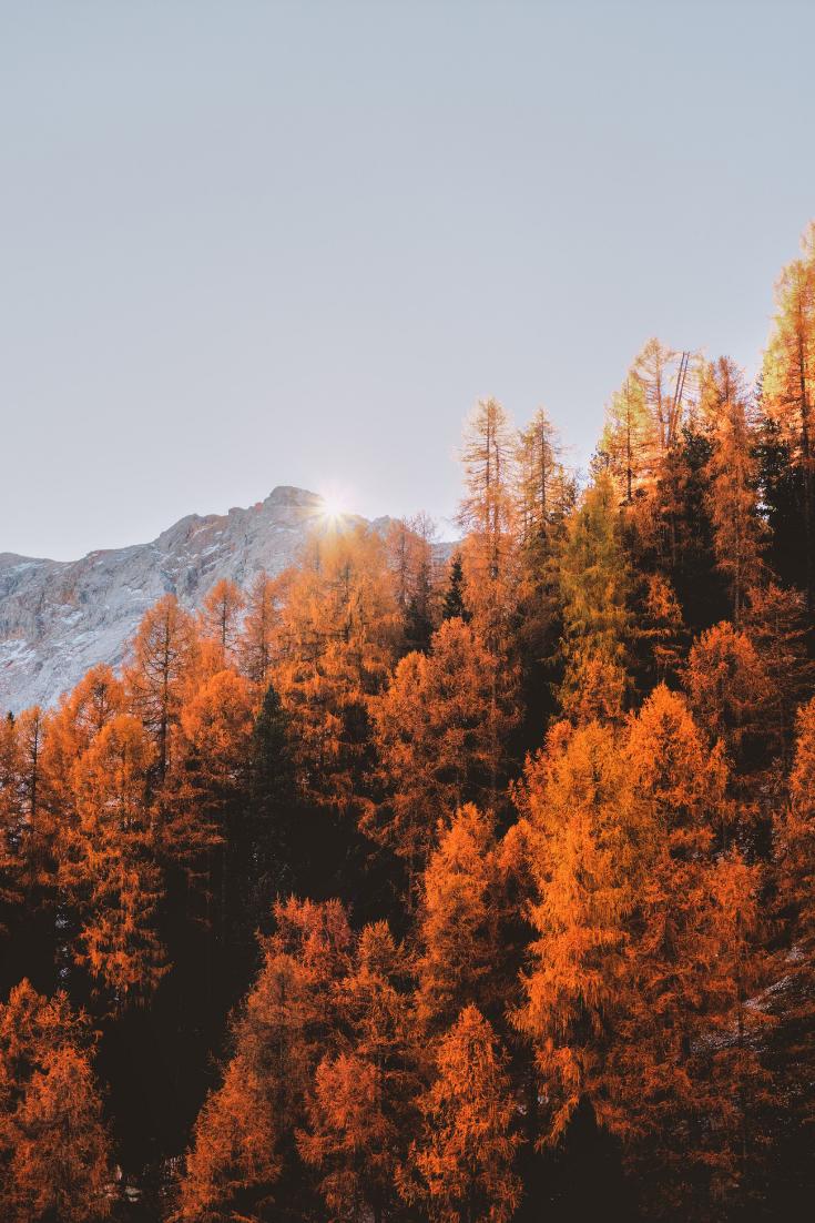 Keine Jahreszeit bietet so gutes Licht in Kombination mit solch tollen Farben wie der Herbst ❤ Das hat auch @eberhard_grossgasteiger erkannt, der großartige Fotograf dieses Bildes. #autumn #nature #naturephotography #octoberwallpaperiphone