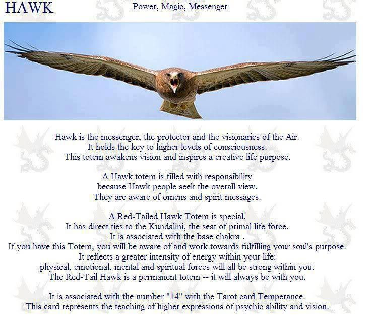 Pin By Tessa Baker On Familiars Spirit Animals And Animal Omens