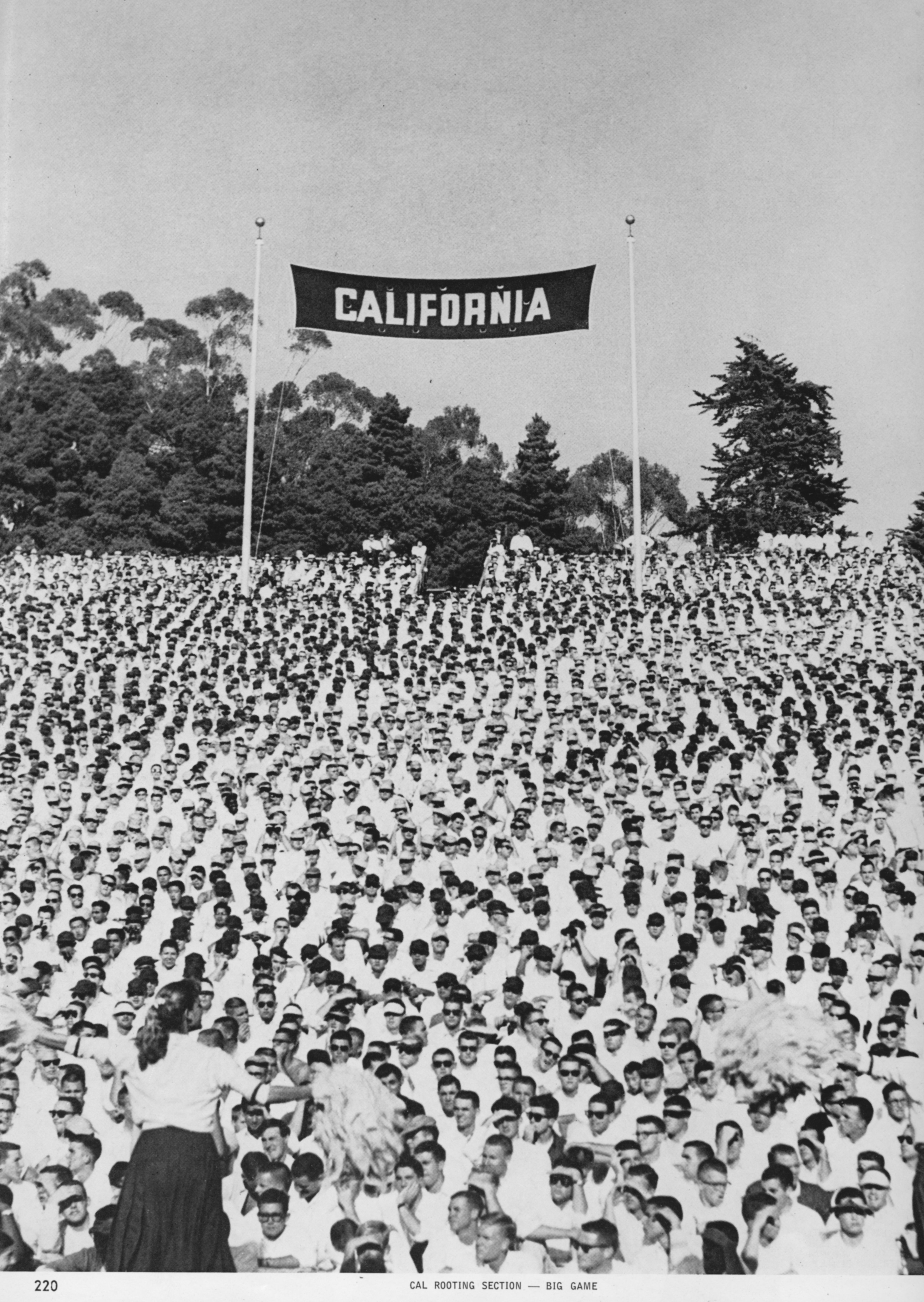 1958 Fans Rooting Section Cal Bears Bear Pride California Golden Bears