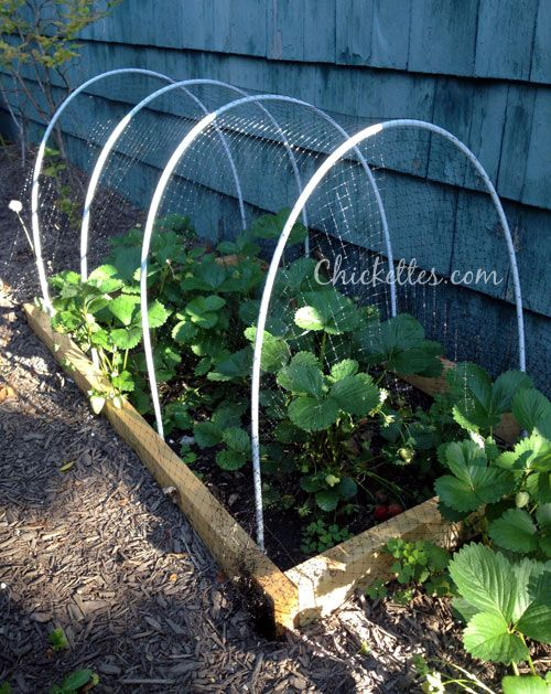 Chickettes.com Portable Strawberry Cage   Keep Out The Birds And Squirrels!