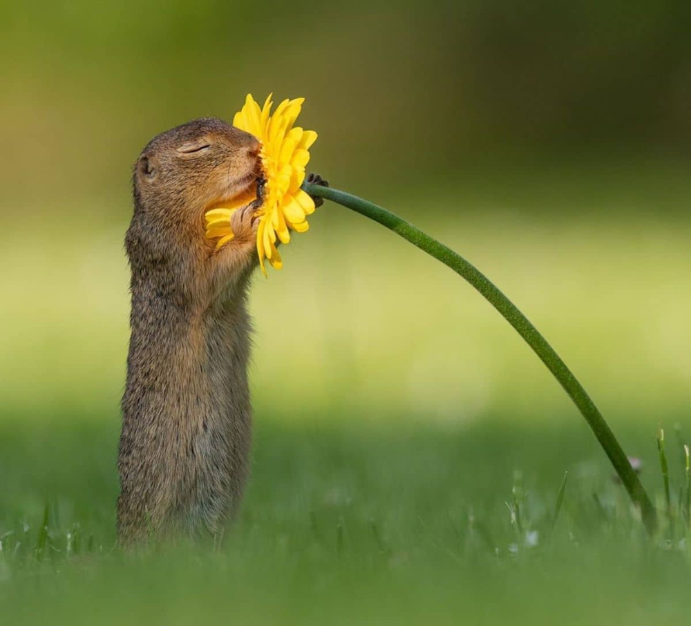 Photographer Captures The Adorable Moment A Squirrel Takes In The Sweet Smell Of A Flower Wildlife Photography Squirrel Pictures Dog Smells