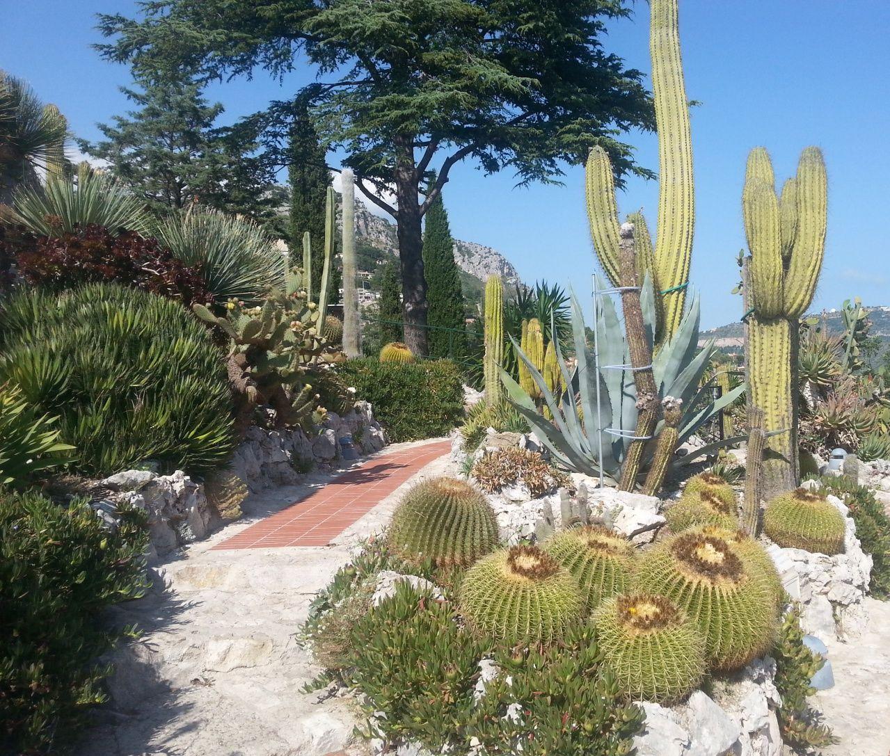 Jardin exotique village eze au bord de la mer medit rrann e gardens jardin exotique d 39 eze - Photo de jardin exotique ...