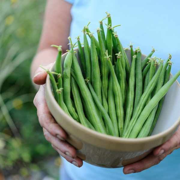 How To Grow French Beans French Bean Regrow Vegetables 400 x 300
