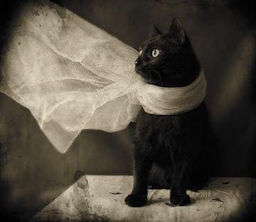 Stylish black cat