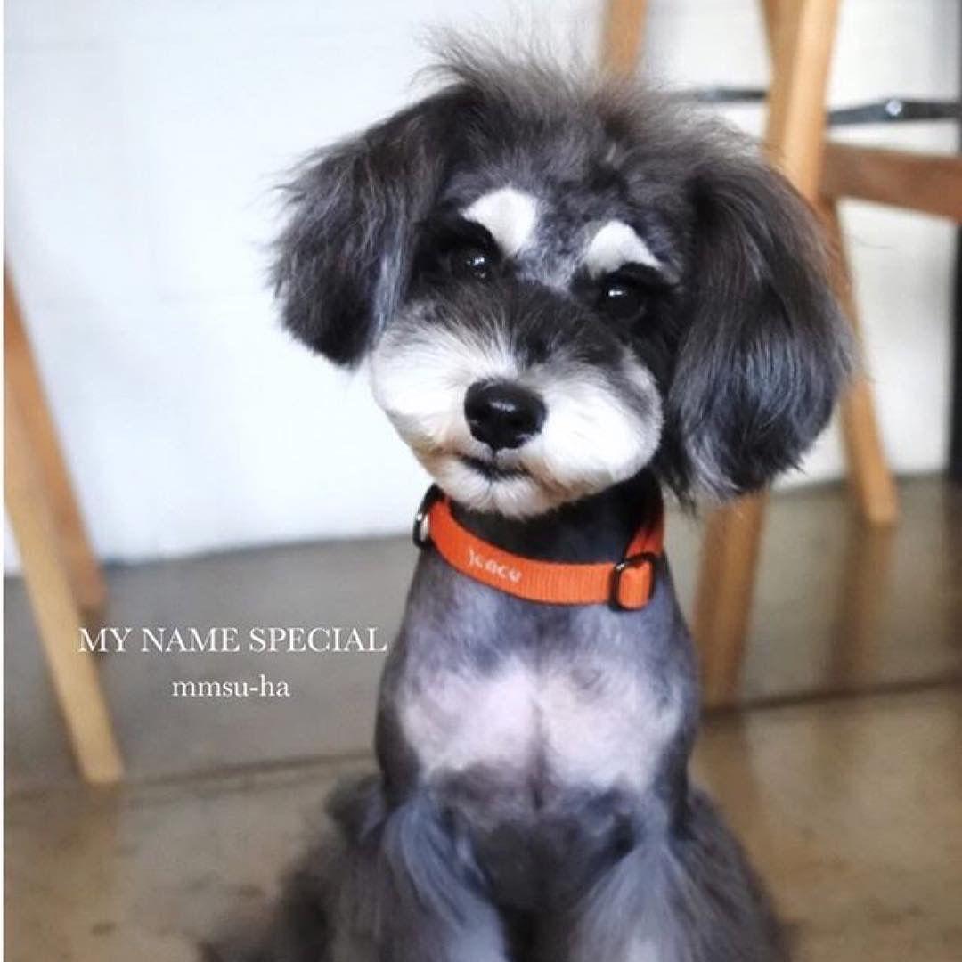 Mmsu Haの首輪をつけた癒やしのかわいい犬たち 犬 かわいい 首輪 犬