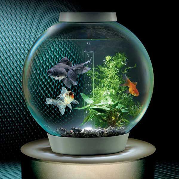 Biorb self filtering aquarium acuario pinterest - Peceras pequenas decoradas ...