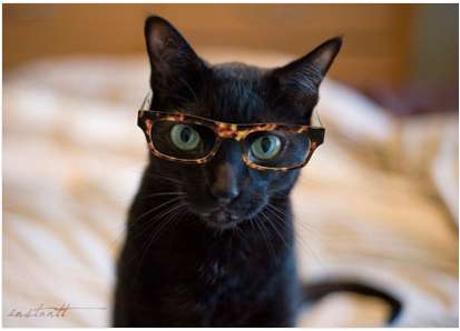 @Julie Warner -- just because you're so one of those crazy cat people