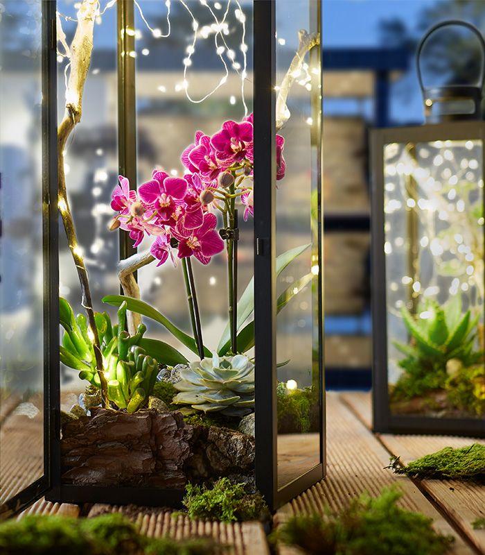 Laterne dekorieren mit Pflanzen