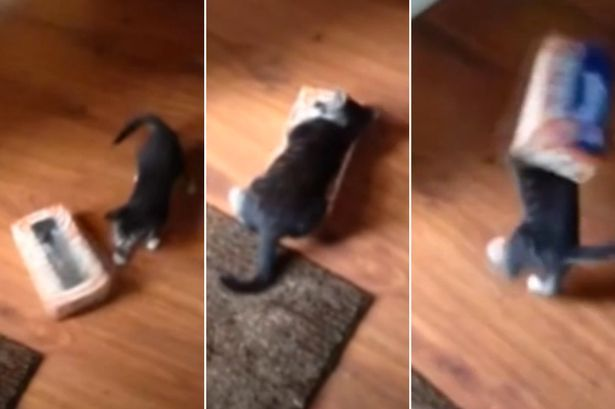 Cute Kitten Gets Head Stuck In Box Of Tissue Is Adorable