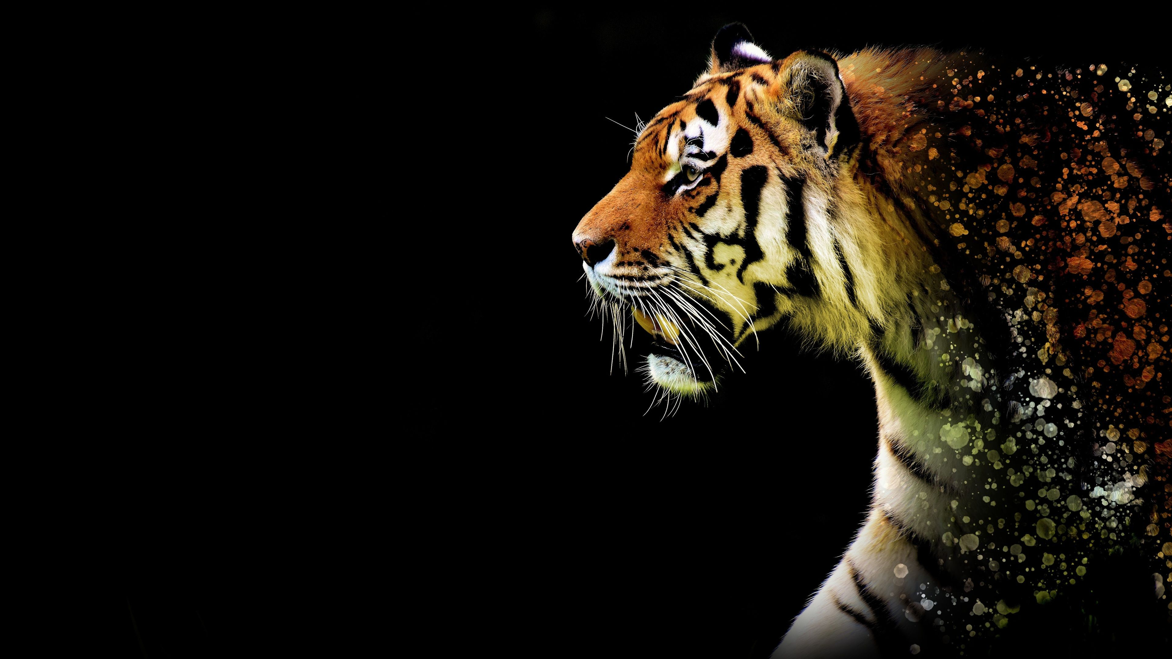 Tiger Abstract 4k Tiger Wallpapers Hd Wallpapers Artwork Wallpapers Animals Wallpapers Abstrac Animal Wallpaper Geometric Animal Wallpaper Abstract Animals