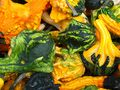 Gourds in All Guises