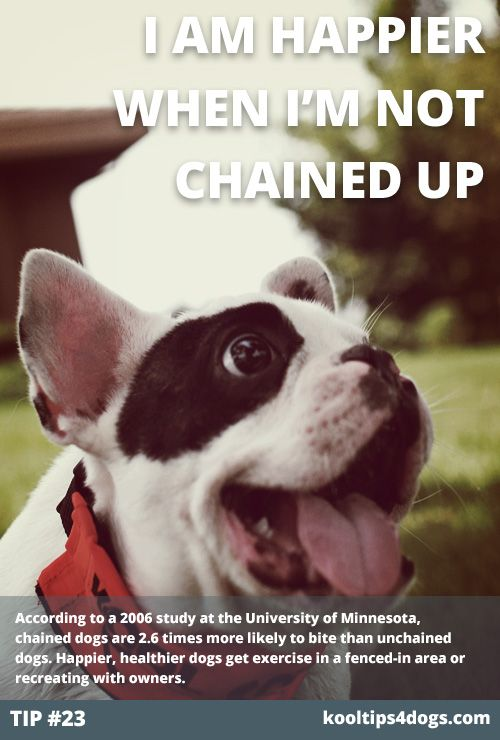 Unchain Your Dog And Eliminate The Possibility Of Attacks