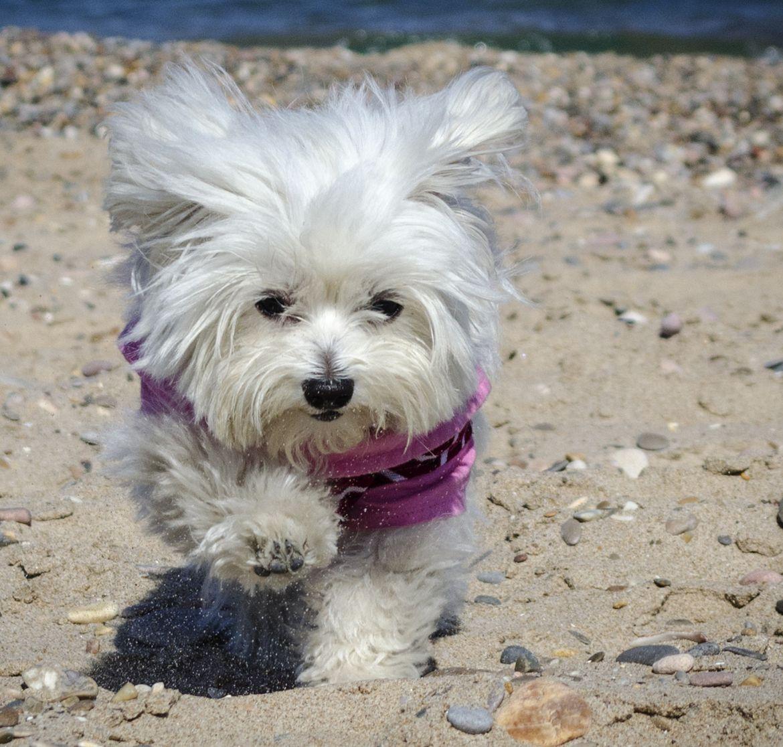 lulu en la playa