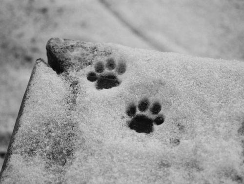 Imagem de snow, winter, and cat