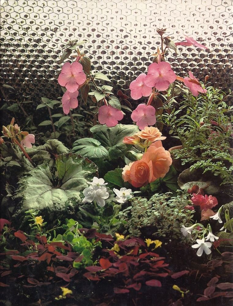 e2412a2e8e285b8009b19c78b5677440 - The Time Life Encyclopedia Of Gardening